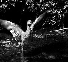 Almost an Eagle by Luke Stevens