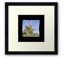 TTV Image ( Through The Viewfinder)#6 Framed Print