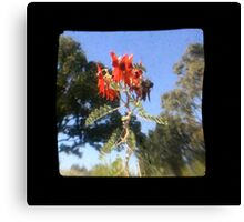 TTV Image ( Through The Viewfinder)#7 Canvas Print