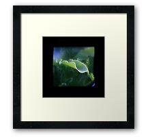 TTV Image ( Through The Viewfinder)#8 Framed Print