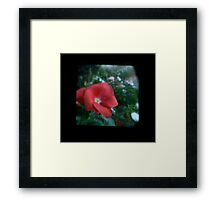 TTV Image ( Through The Viewfinder)#10 Framed Print
