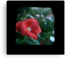 TTV Image ( Through The Viewfinder)#10 Canvas Print