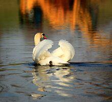 Swimming Swan by Melissa Ann Blair