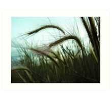Grass Blowing in the Wind Art Print