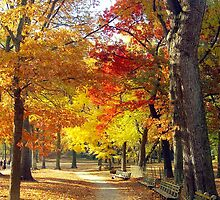 Autumn foliage in Central Park  by Alberto  DeJesus