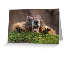 Marmot Surprise Greeting Card