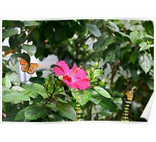 Monarch Butterfly Migration in Flight Poster