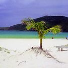 Flamenco Beach, Puerto Rico by Alberto  DeJesus