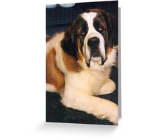 Sad Saint Bernard Eyes Greeting Card