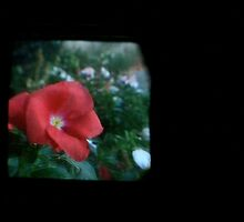 TTV Image ( Through The Viewfinder)# 5 Cards by delta58