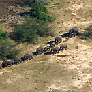 Elephants from the air! by jozi1