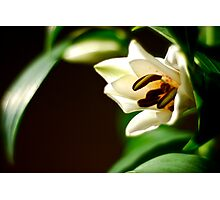 Easter Lily Photographic Print