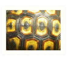 Angulate Tortoise Shell Art Print