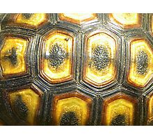 Angulate Tortoise Shell Photographic Print