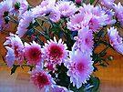 Chrysanthemum by Albert