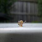 cute lil snail  by britt thomson