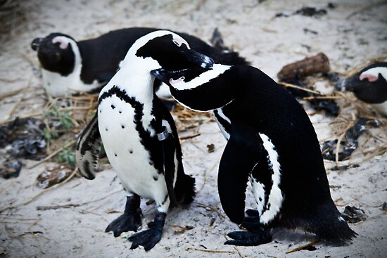 { penguin love } by Brooke Reynolds