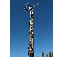 nature's totem pole Photographic Print