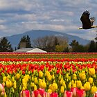 Bald Eagle crossing a Tulip Field by Mikhail Lenitsyn