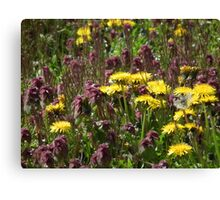 Tiny suns on a field of purple Canvas Print