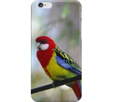 Bird on the wire - the beautiful Rosella  iPhone Case/Skin