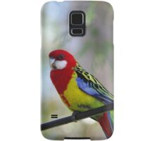 Bird on the wire - the beautiful Rosella  Samsung Galaxy Case/Skin