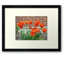 Orange Tulups Framed Print