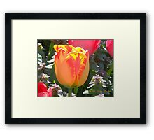 Organge and Yellow Tulup Framed Print