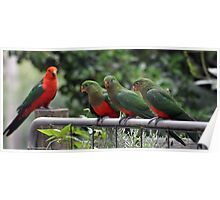 Family of King Parrots Poster