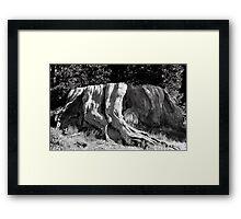 Mark Twain Stump Framed Print