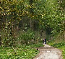 Woodland Walk by WatscapePhoto