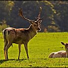 Fallow Buck and Doe by ten2eight
