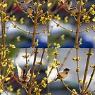 Birds love by iulix