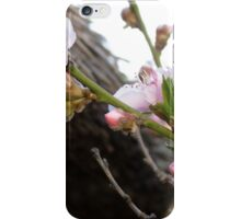 Peach tree blossoms iPhone Case/Skin