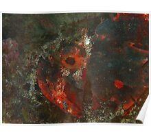 black devil 5 scorpionfish rottnest island reef Poster