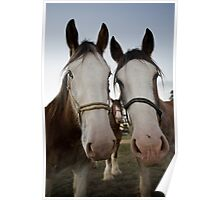 Moora Clydesdales Poster