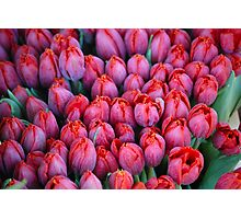 Tulips - Red Photographic Print