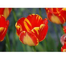 Yellow/Red Sunshine Photographic Print