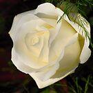 White Beauty by vbk70