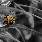 Bee by Melissa Dickson
