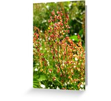 URP(Rumex Acetosa?) - Max Patch, N.C. Greeting Card