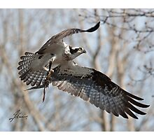 Nesting Materials Photographic Print