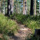 Path #1 by Hilda Rytteke