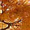 *AVATAR - Autumn Colours -  Nature in its Entirety*