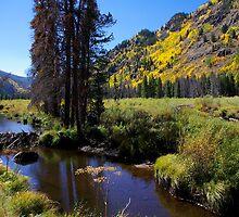Beaver dam on Homestake Creek by Klaus Girk