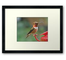 On Guard! Framed Print