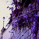 Wisteria on the wall by Moon Black