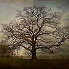 The Old Oak Tree by MClementReilly