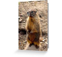 Marmot Standup Greeting Card
