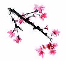 Sakura tree Photographic Print